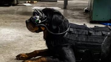 Американските военни ще командват бойните си кучета с очила с добавена реалност